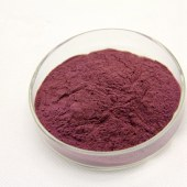 Aronia extract powder  anthocyanin 25%