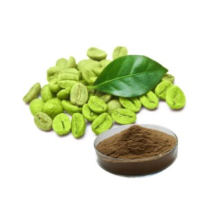 Best Match ISO Certificate pure natural green coffee bean extract 50% Chlorogenic acid for sale