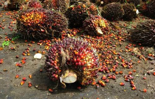 Thailand expands palm oil and rubber markets to India