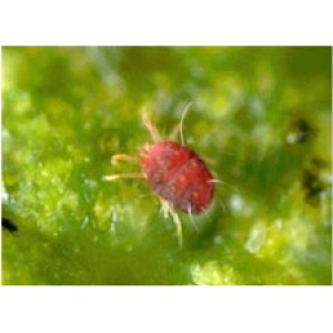Insecticides Dicofol 20% EC for Control a variety of mites