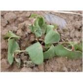 biopesticides Fertilizer additive