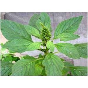 Herbicedes Rimsulfuron 25% WG for export