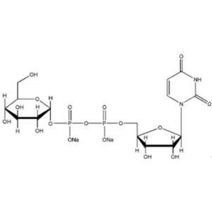 Uridine 5'-diphosphoglucose disodium salt(UDP-G)