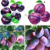 Dark plum liquid flavor & fragrances essence SD 34041 for Dairy foods & Beverages