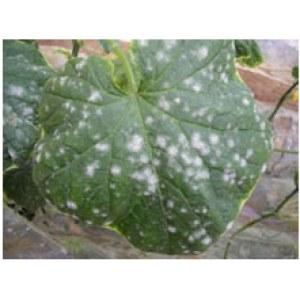 Fungicides Difenoconazole 8%, 10%RR