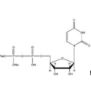 Uridine 5'-diphosphate disodium salt  UDP- Na2