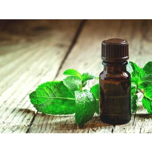 Peppermint Essential Oil Factory Price