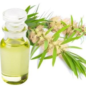 Food Grade Edible Sacha Inchi Oil From Big Factory Organic Quality, INCA INCHI Plukenetia Volubilis Oil