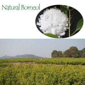 Synthetic <em>Borneol</em>