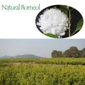 Natural Borneol flake