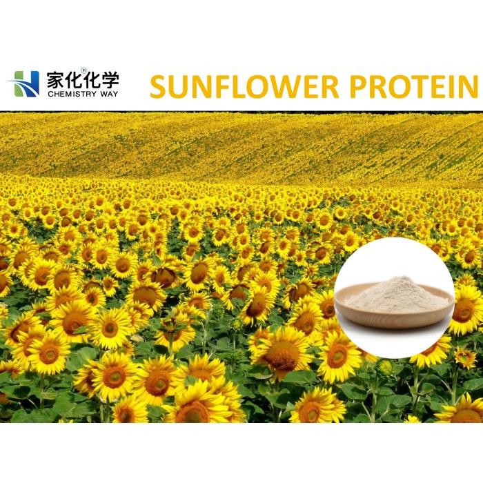 Sunflower protein