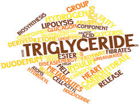What are triglycerides